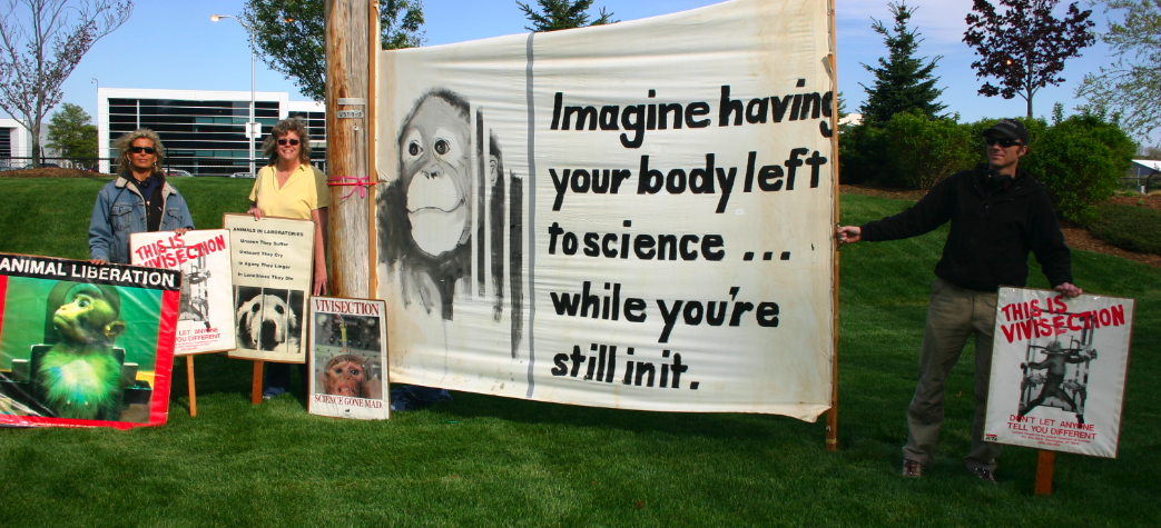 animal cruelty testing essay