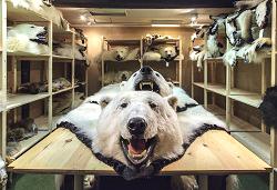 polarbearparts